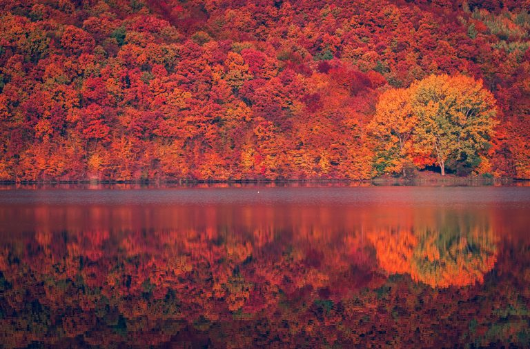 autumn-colors-reflected-on-lake_t20_Ep4jyY